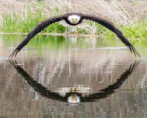 """""""Stunning"""" Perfectly Symmetrical Pic Of Eagle And Its Reflection Is Viral"""
