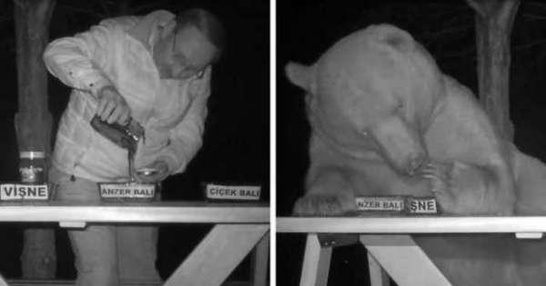 Turkish Beekeeper Enlists Thieving Bears As Honey Testers