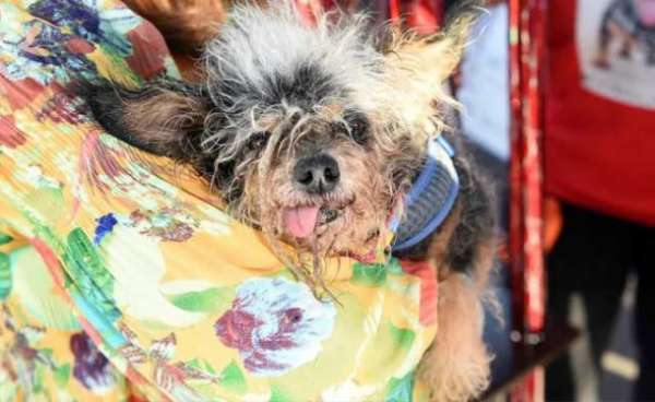 Meet The Winner Of This Year's 'World's Ugliest Dog Contest'