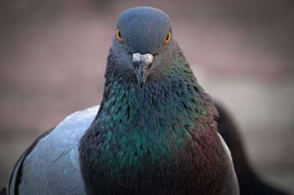 Passenger Got £28,000 Payout Because They 'possibly' Slipped On Pigeon Poo