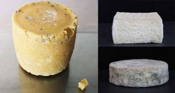 """This """"Human Cheese"""" Is Made From Celebrity Armpit Bacteria"""