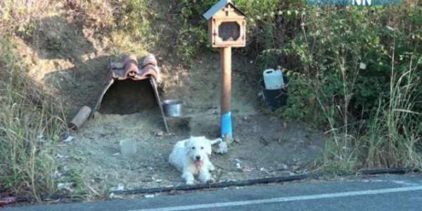 """Greek Hachiko"" Has Been Waiting By His Owner's Car Crash Site For 18 Months"