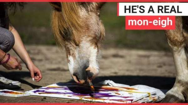 Art Student Teaches Horse How To Paint