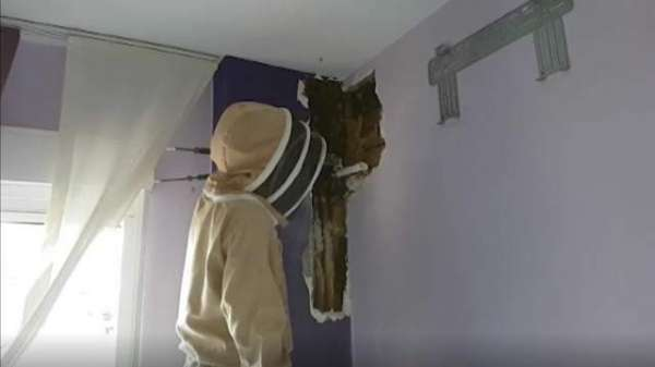 Family Discover Colony Of 80,000 Bees Living In Their Bedroom Wall
